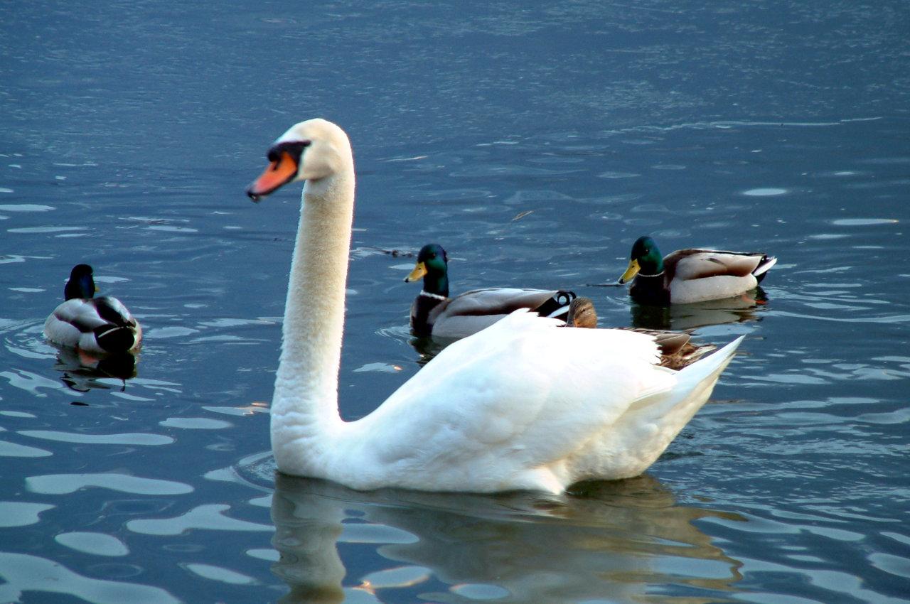 Fauna lago di Como
